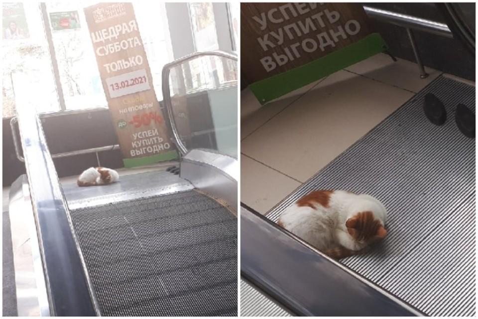 Кот выбрал для сна не самое тихое место в универмаге. Фото: Сергей Букарев/ПОДСЛУШАНО ЯЛТА/VK