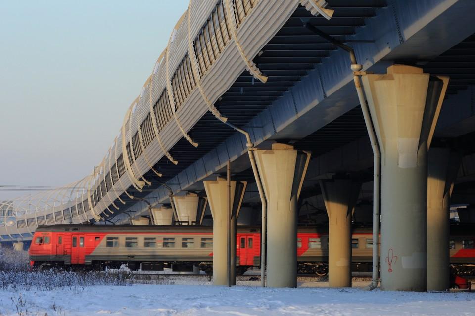 Минтранс России утвердил новые правила перевозки животных в поездах