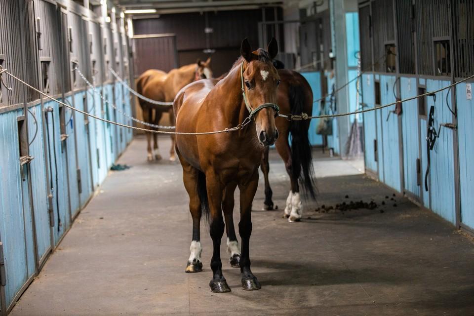 Почему лошадь напала на своего хозяина, пока не ясно.