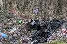 Благоустроить тропинки и поставить фонари: В Крыму займутся городскими лесами