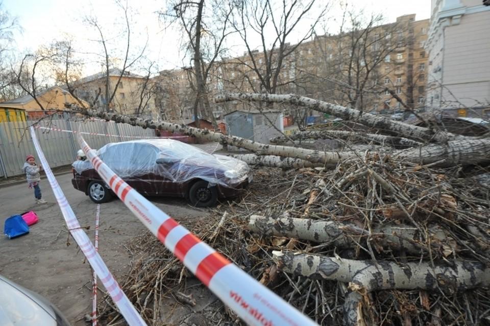 Вместо старых деревьев в городе обещают посадить несколько тысяч новых.