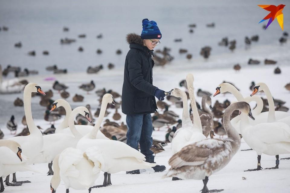 Диких птиц не стоит подкармливать хлебом - особенно черным.