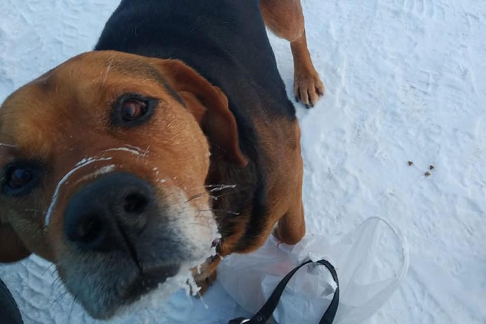 Сотрудники предприятия уверяют, что никаких розовых собак рядом с проходной они не видели. Фото: администрация Дзержинска