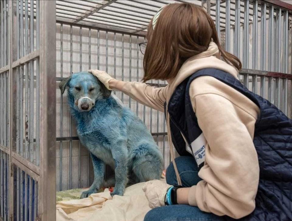 Причиной окрашивания собак в Дзержинске стала обычная краска с необычным названием. Фото: Администрация Дзержинска