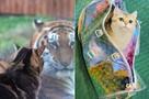Подружился с тигрицей, начал работать в магазине и завел Instagram: самые популярные коты Ростова-на-Дону