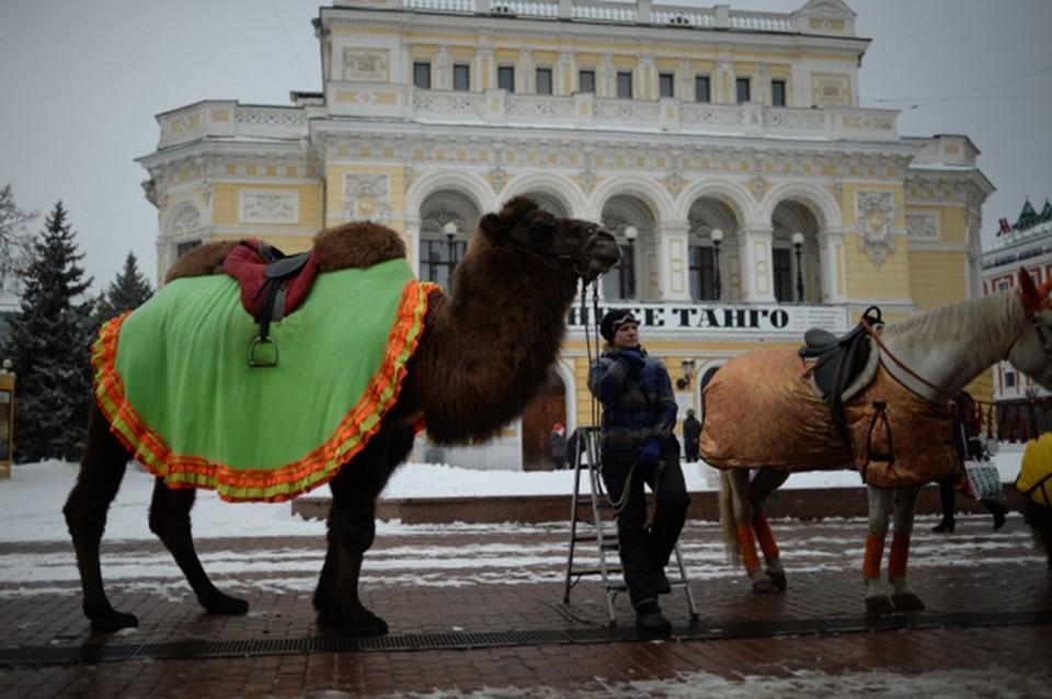 Ночь театров 2021 в Нижнем Новгороде: полная программа мероприятий.