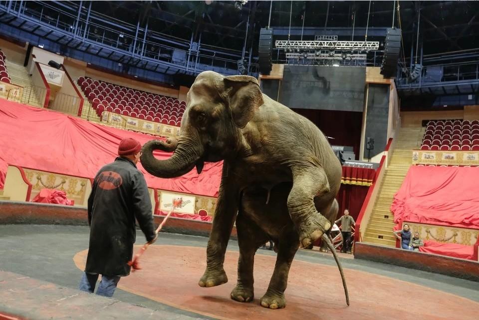 В России предложили запретить животных в цирках после драки слонов в Казани