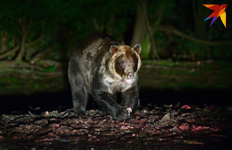 В прошлом году лето, как вы помните, было теплым, поэтому медведи не выходили к поселкам.