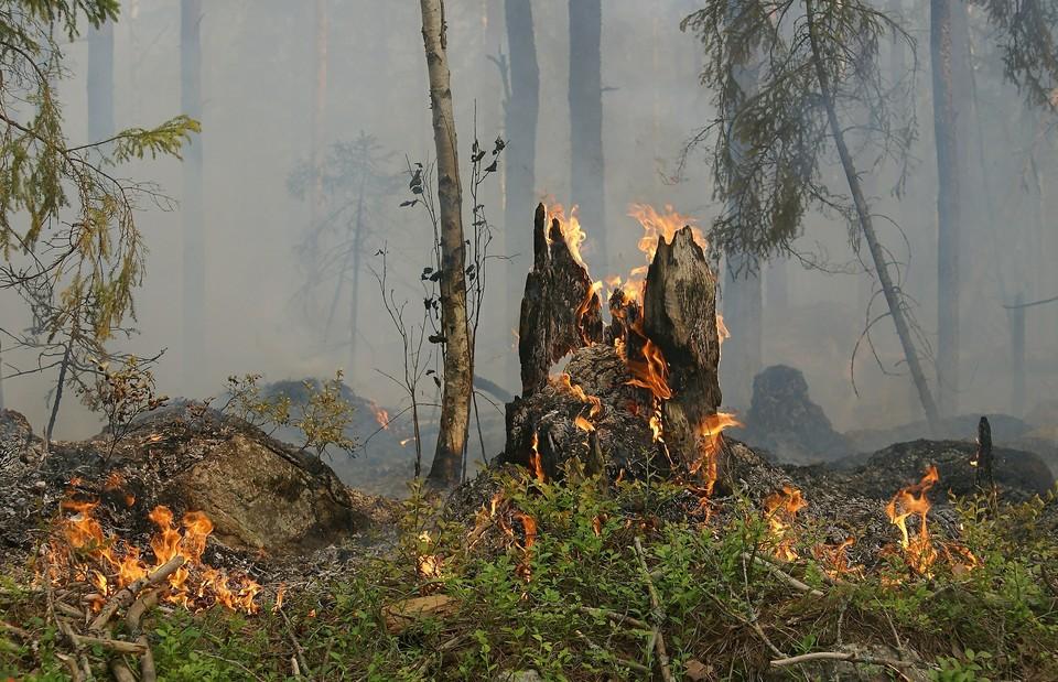 Соответствующее ограничение о пребывании жителей и гостей региона в лесах с 5 апреля сообщила служба природопользования по Астраханской области