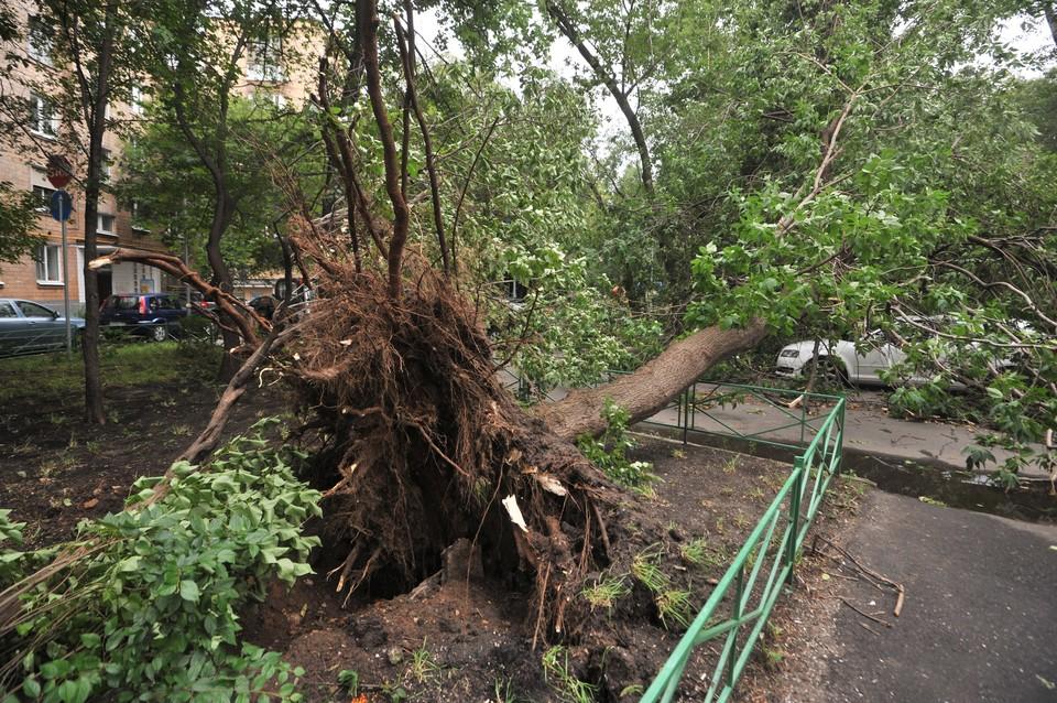 МЧС предупреждало о сильном ветре