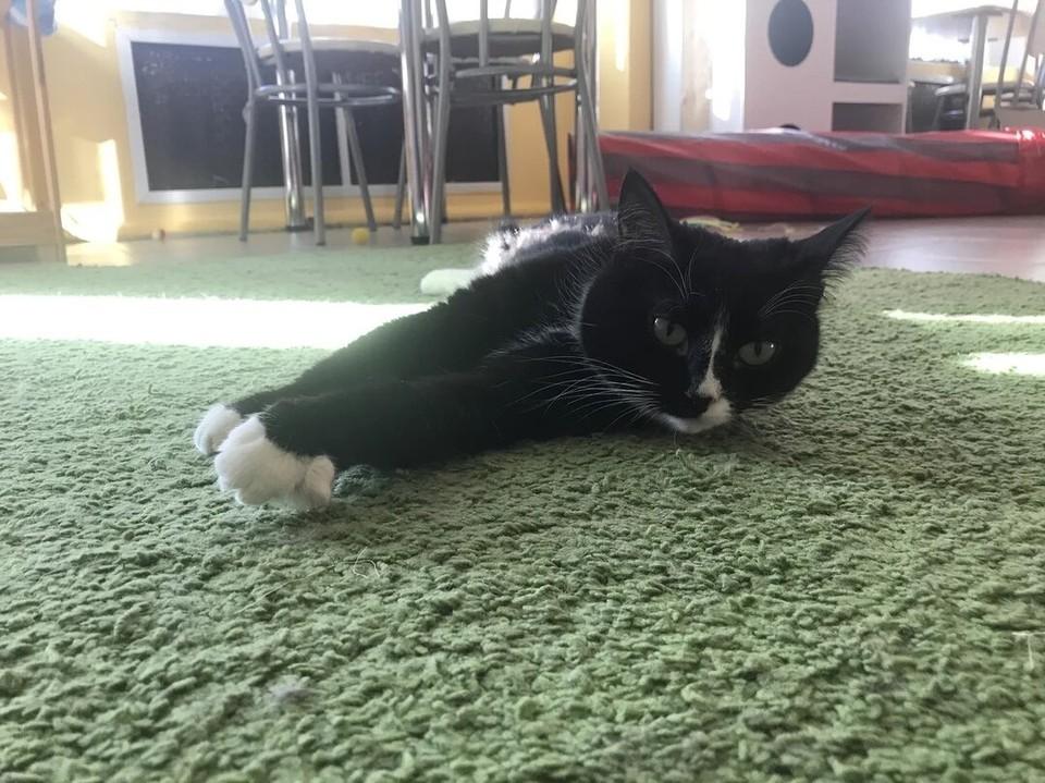 12 кошек остались взаперти в котокафе, и только одну кошку хозяйка успела забрать. Фото: /vk.com/meowland