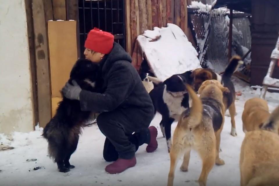 """В приюте, где произошел инцидент, живет более сотни собак. Фото: благотворительный фонд """"Вторая жизнь""""."""