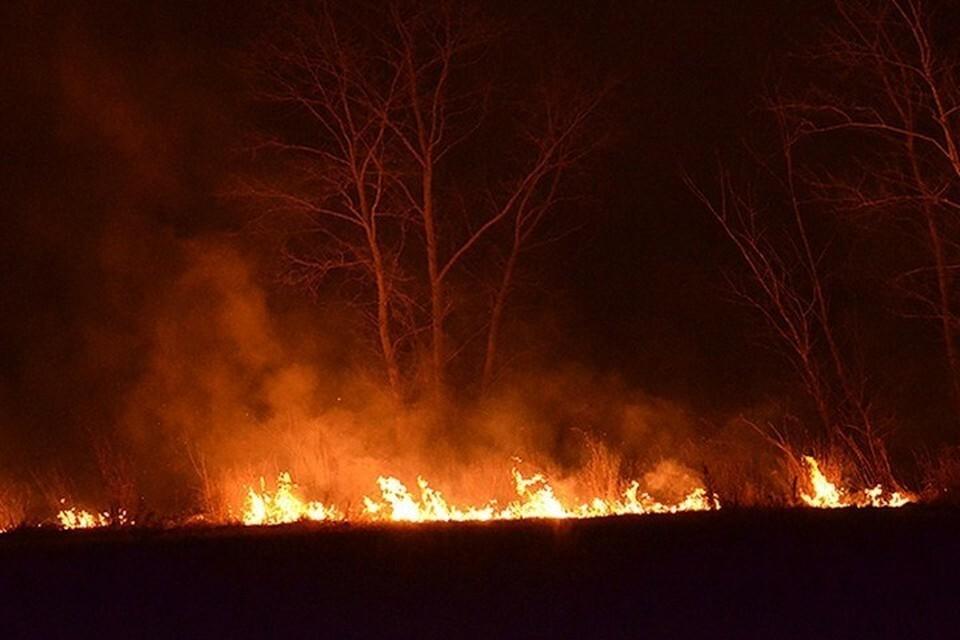 Правила разведения костров на участках ужесточили, чтобы предотвратить пожары.