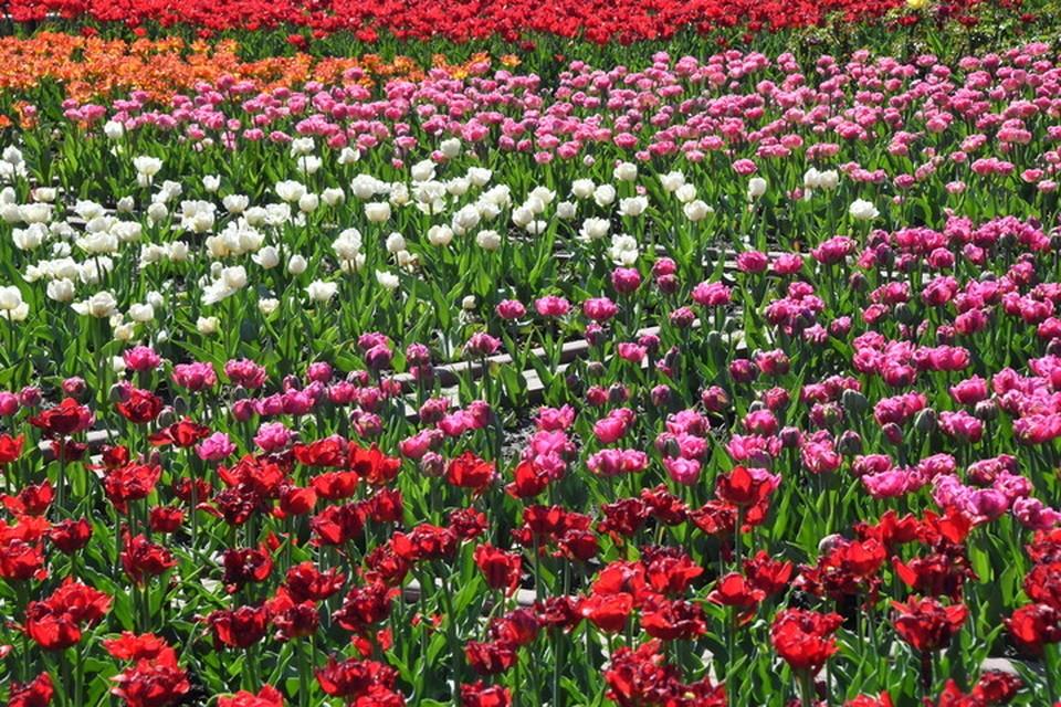 В Ессентуках занялись защитой высаженных на клумбах цветов