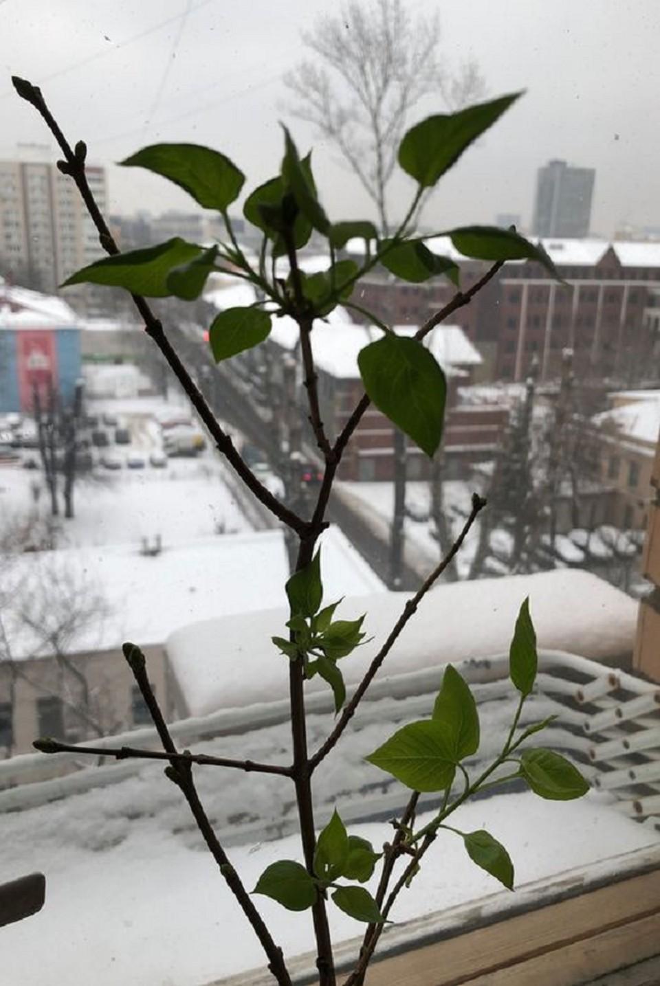 Сейчас за окном +1 и накрапывает дождь вперемешку со снегом. Дороги за ночь подмерзли, поэтому будьте внимательны за рулем и в качестве пешехода. Всем удачного дня!