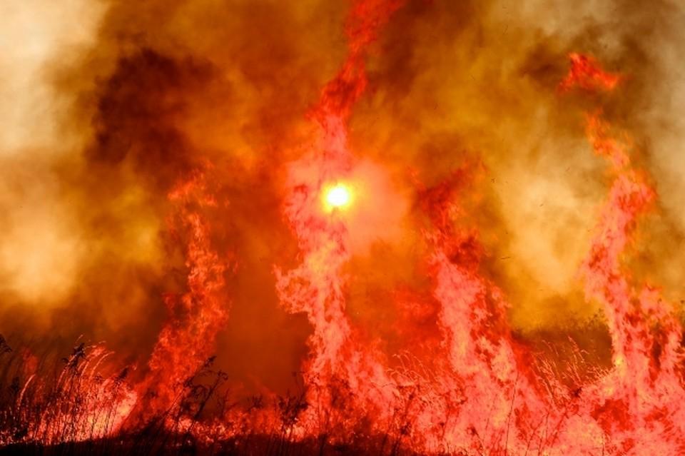 7 апреля огонь в Приморье потушили на территории более 988 гектаров
