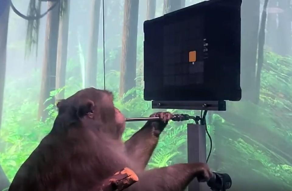Стартап Илона Маска показал обезьяну, играющую «силой мысли» в видеоигры
