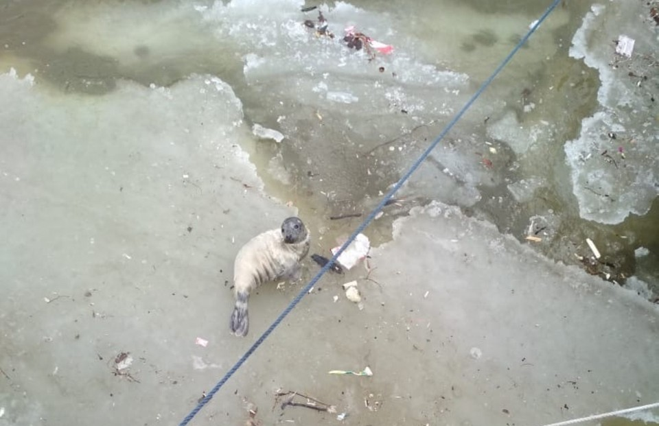 Тюлененка удалось спасти Фото: vk.com/sealrescue