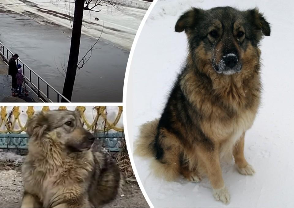"Как собака оказалась на реке - загадка. Фото: Елена Шиман/vk.com, скриншот видео ""ТВЖ""/vk.com"