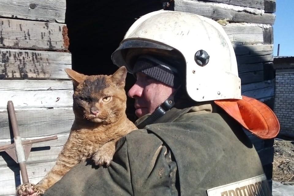 Кот уже прославился своим спокойствием на весь интернет. Фото: Амурский центр гражданской защиты и пожарной безопасности