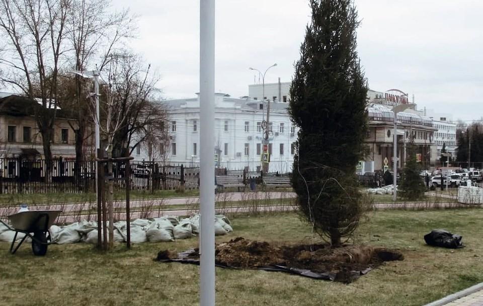 В парке посадили ели и сосны.