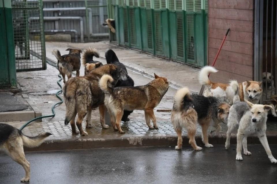 Проблема бродячих собак стоит очень остро в республике