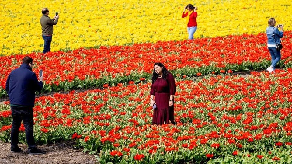 В Голландию так просто не поедешь за селфи в тюльпанах. Фото: eurointegration.com