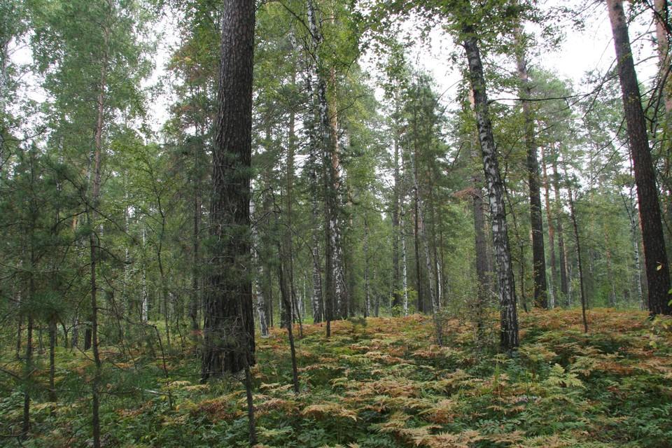 В минприроды напоминают о необходимости соблюдать правила пожарной безопасности в лесах