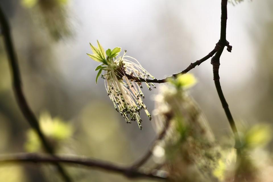 Акцию «Сад памяти», запланированную на 27 апреля, перенесли в связи с погодными условиями