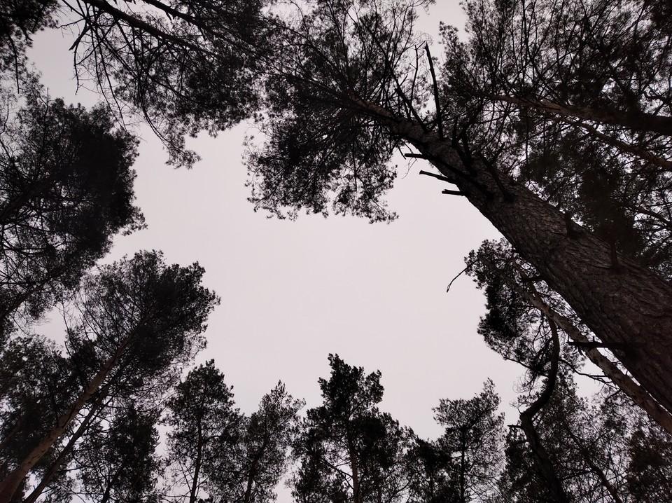 Вырубку вели в лесополосе