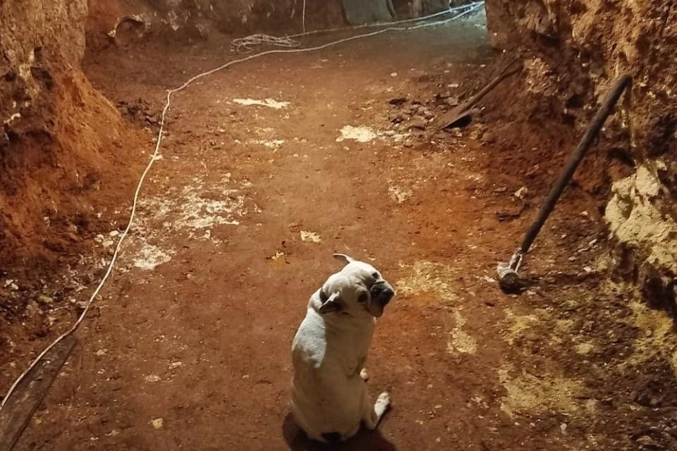 В пещере можно будет побывать на экскурсии. Фото: Tavrida cave/Пещера Таврида/VK