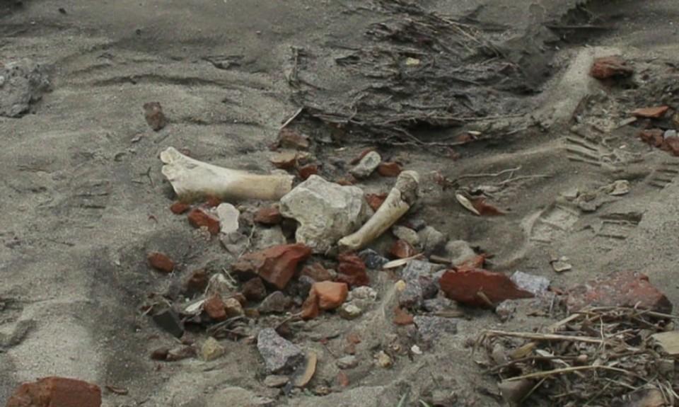 Кости обнаружили в строительном мусоре у стен нижегородского кремля. ФОТО: Facebook Елена Латышева