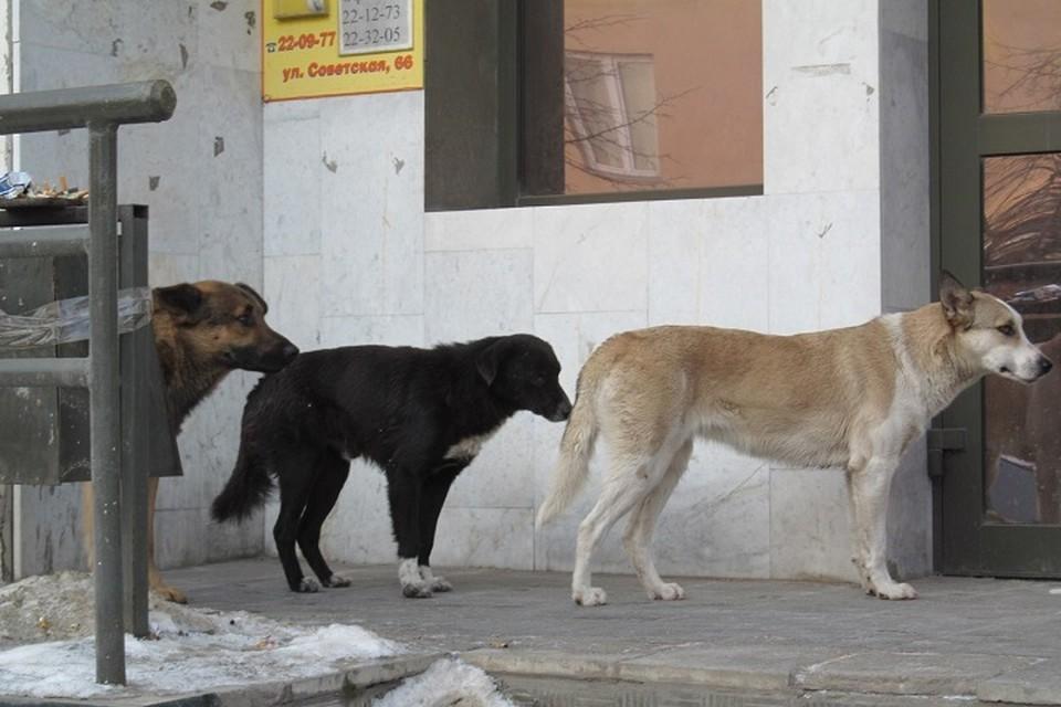 С начала года от укусов бездомных животных пострадали более 1000 татарстанцев.