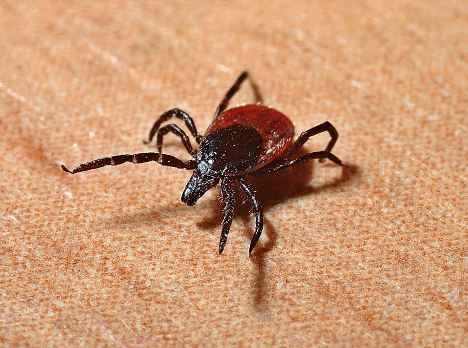 Более 500 человек пострадали от укусов клещей в Удмуртии с начала сезона в 2021 году