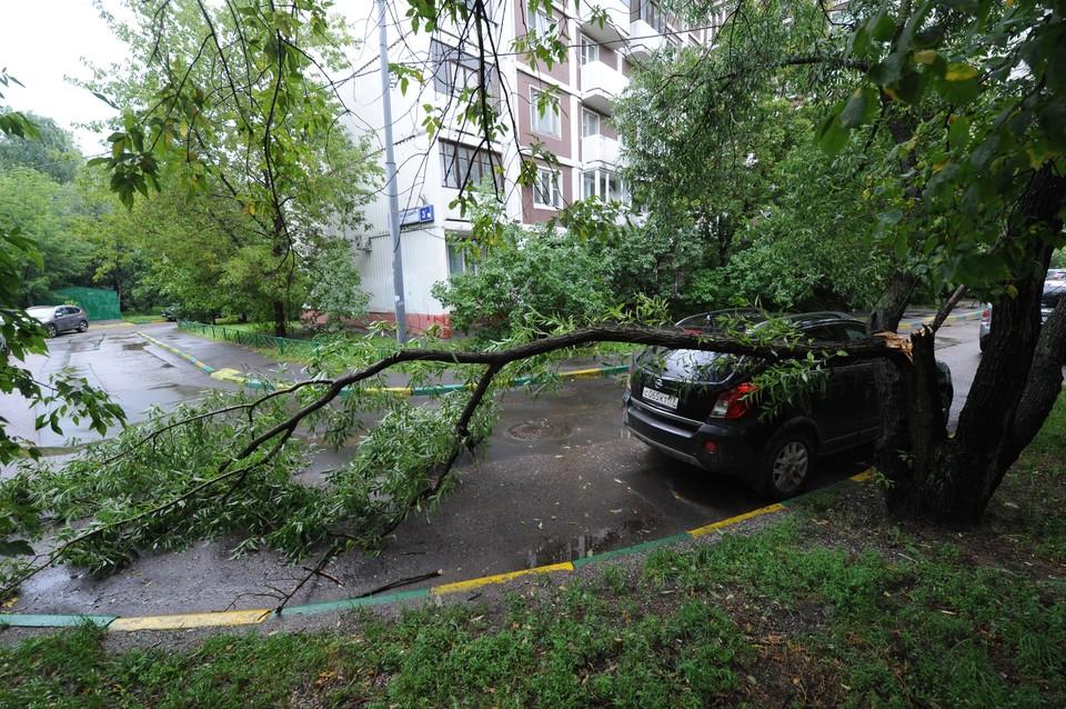 Не следует парковать автотранспорт вблизи деревьев и рекламных щитов - при сильном ветре они представляют большую опасность.