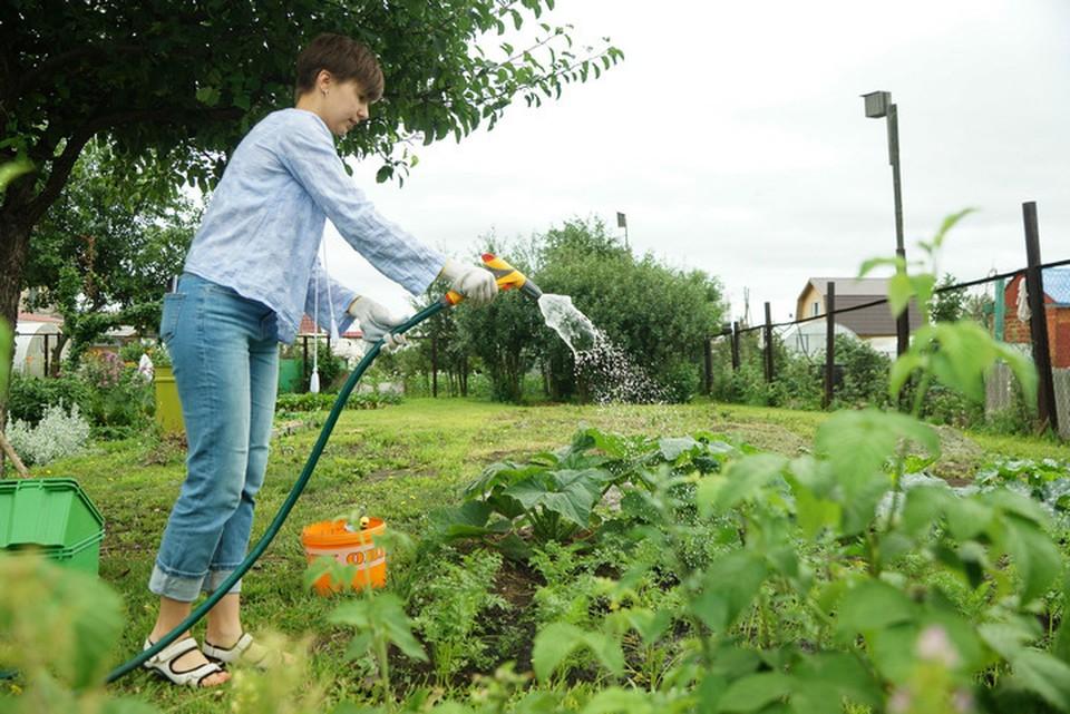 Желающих купить садовый участок в Башкирии прибавилось, а вот продать дачу напротив, уменьшилось