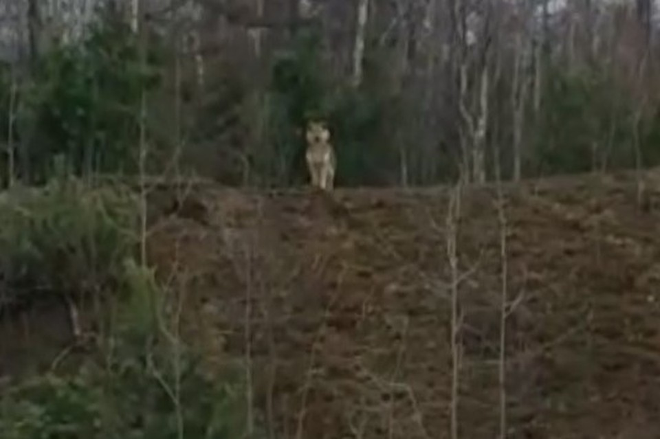 Неизвестные вывезли малыша в лес вместе с другими бродячими собаками и оставили умирать в голоде и холоде