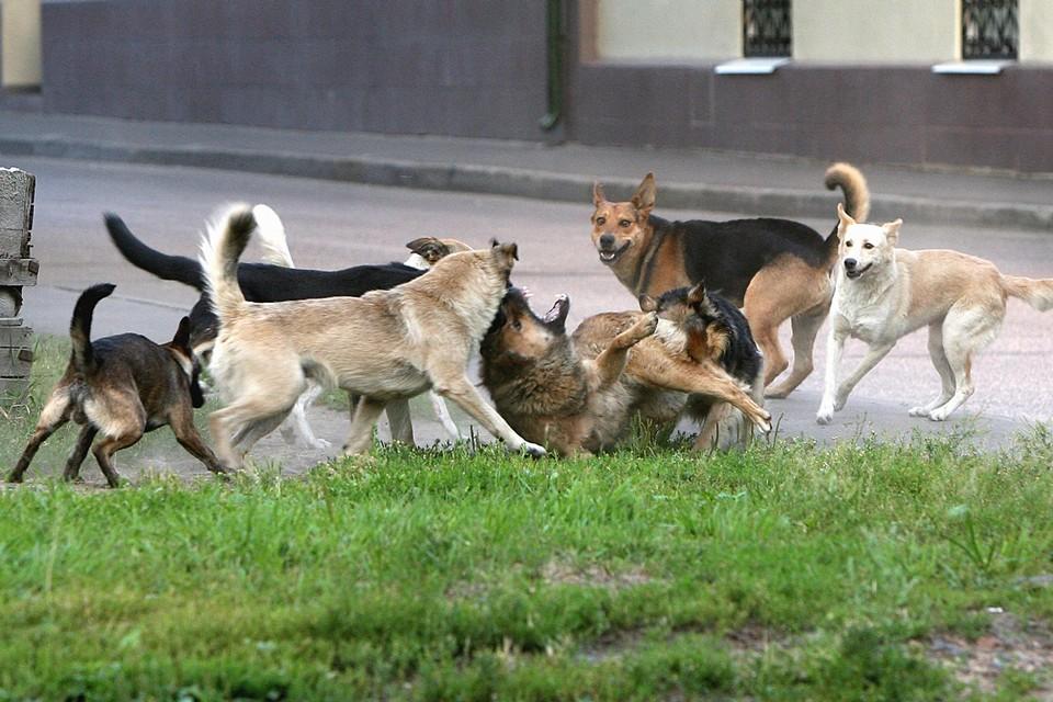 Собак на улицах российских городов и сел становится все больше