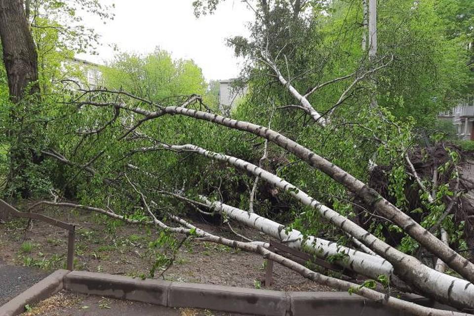 Четыре человека пострадали по время грозы в Петербурге 18 мая