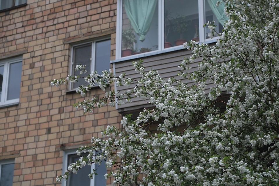 Погода в Красноярске на 29 мая 2021: ожидаются похолодание до +10, дождь и ветер до 10 метров в секунду