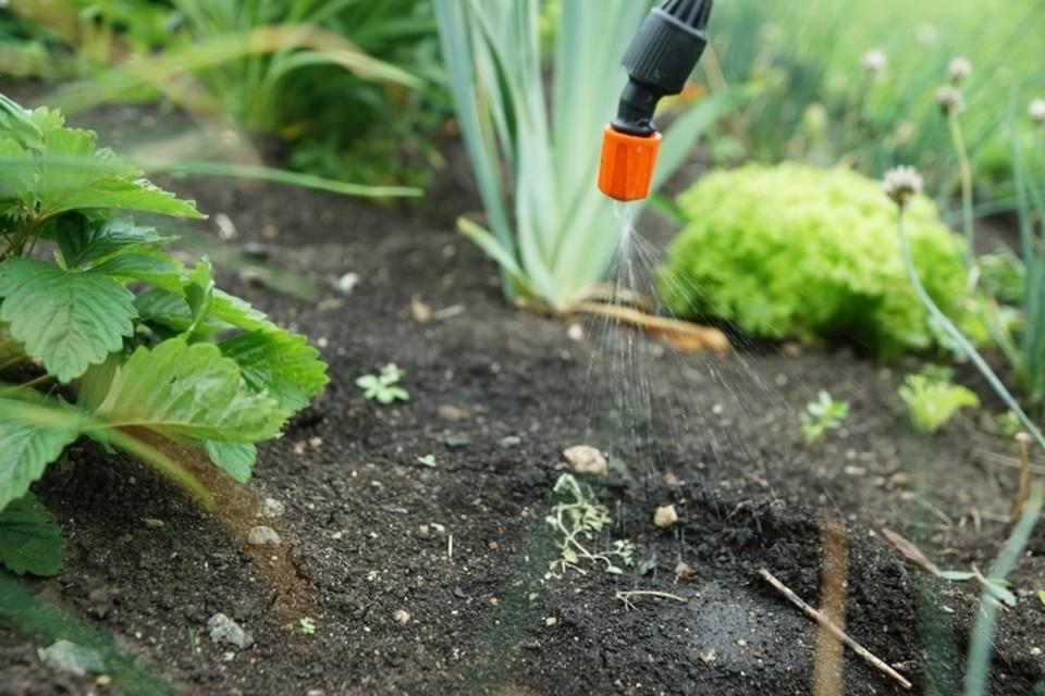 Смолян предупреждают об обработке гербицидом «Шквал».