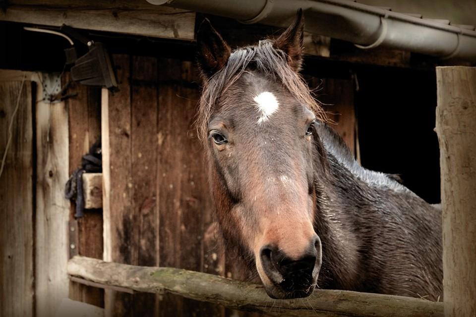Конюшня горела в Ратомке - лошадей успели спасти. Фото: pixabay