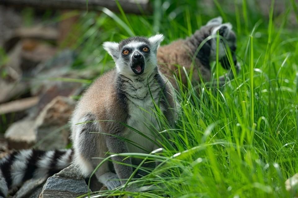 Посетители смогут понаблюдать за жизнью животных Фото: группа в VK Ростовского зоопарка