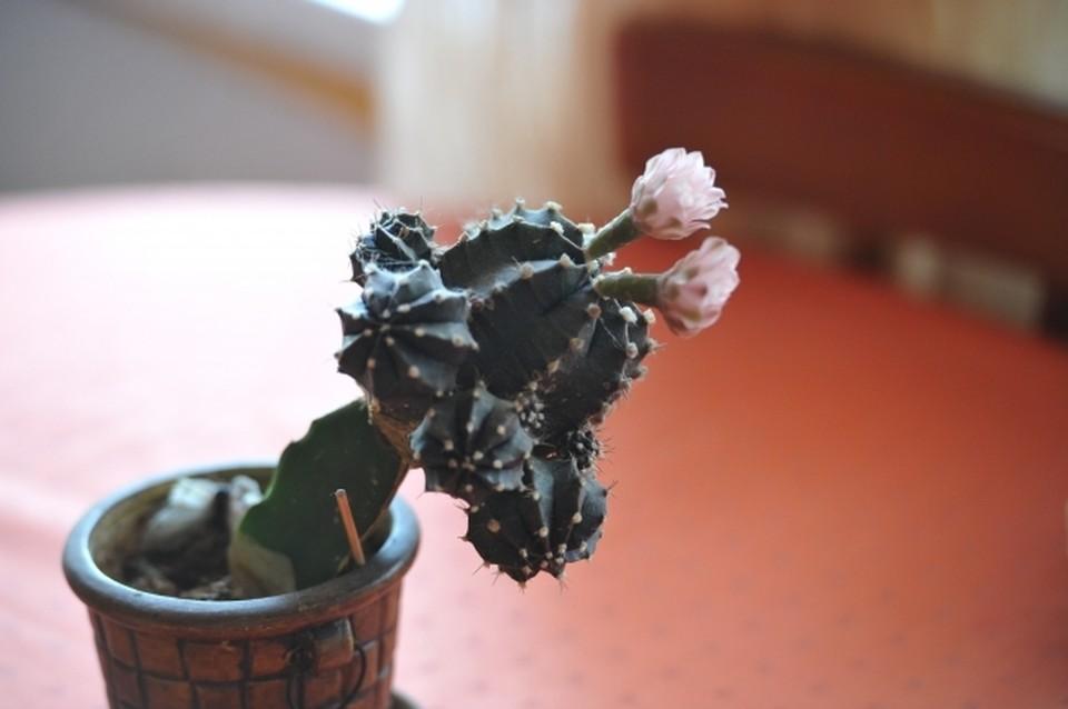 Жильцы решили заменить украденный цветок фотографией.