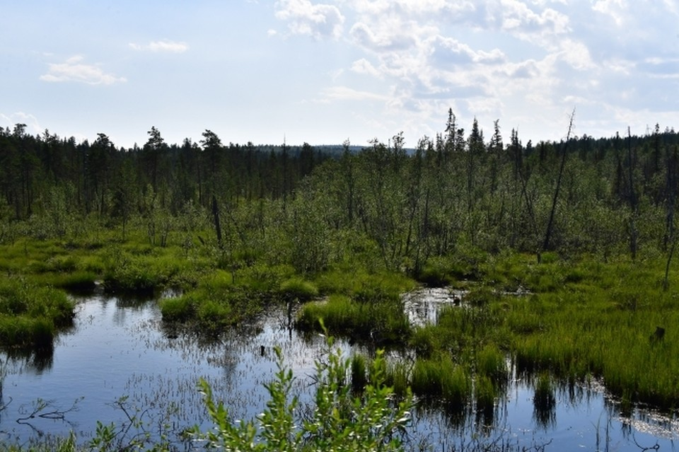 В Перми мужчина заблудился в лесу после корпоратива.