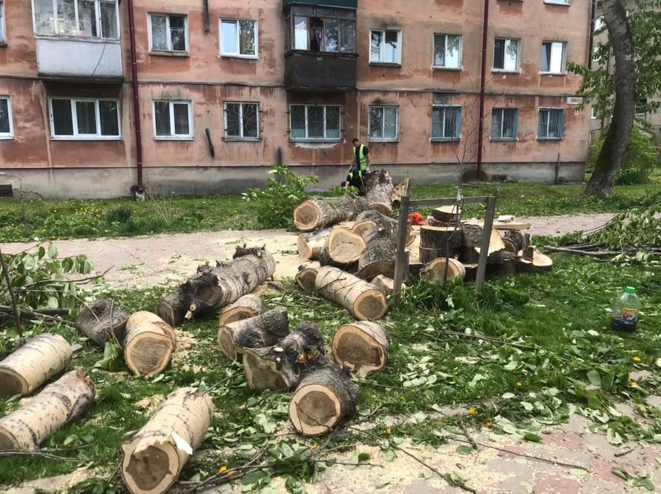 Дерево в циклон рухнуло в аллее Пушкина