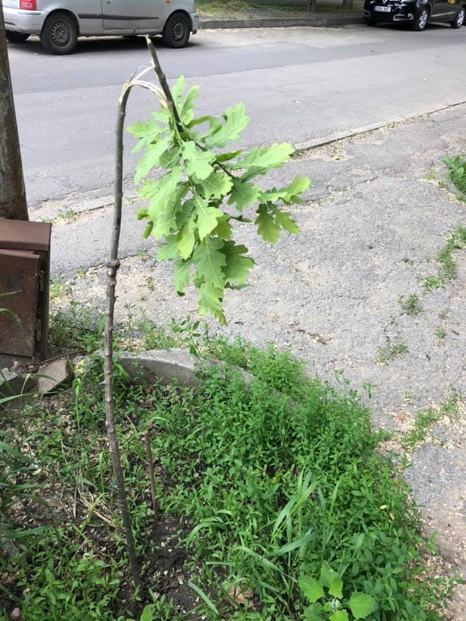 Какие-то идиоты сломали деревце (Фото: соцсети).