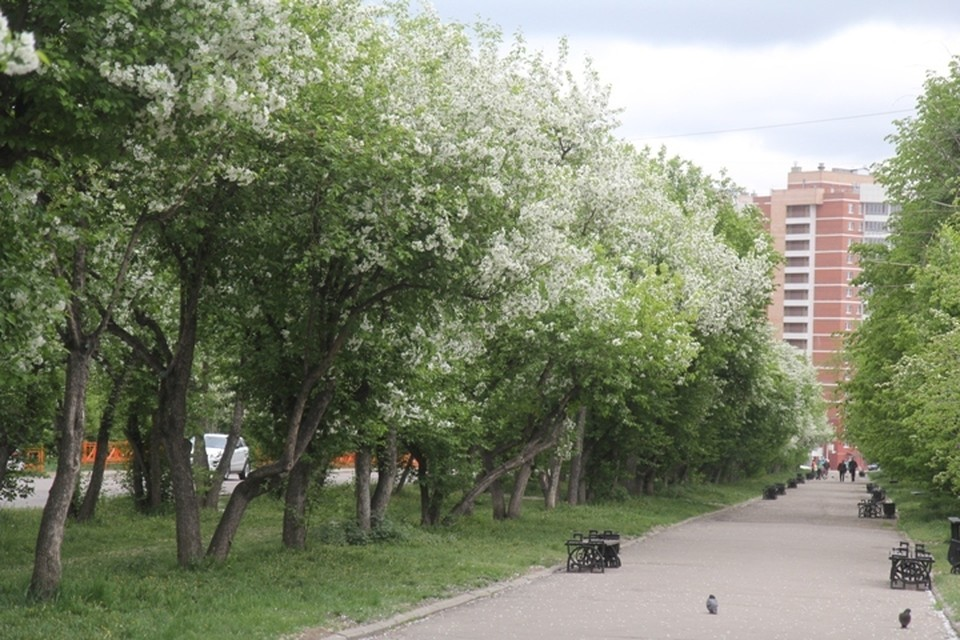 Погода в Иркутске: 7 июня в городе возможны осадки