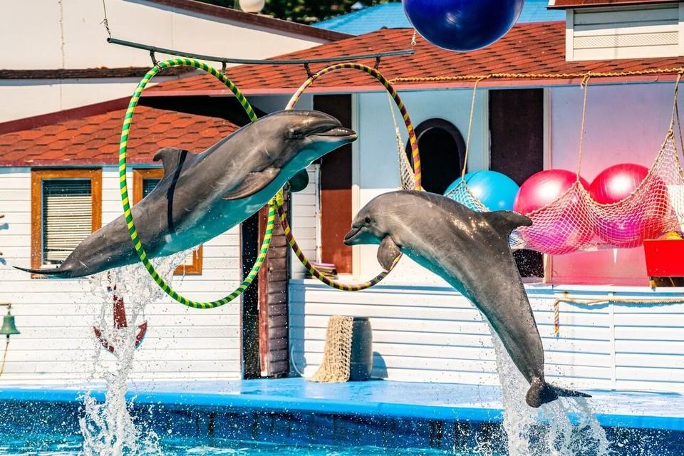 Дельфинарий продолжит свою работу в штатном режиме фото: ДЕЛЬФИНАРИЙ Севастополь