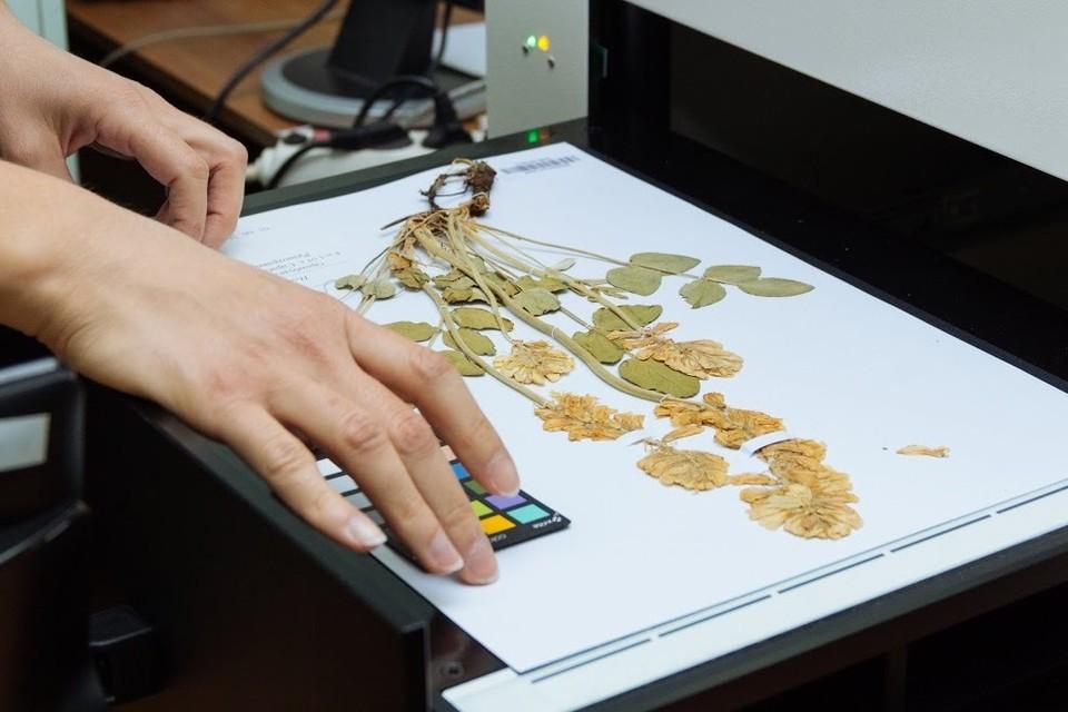Специалисты сканируют образцы растений
